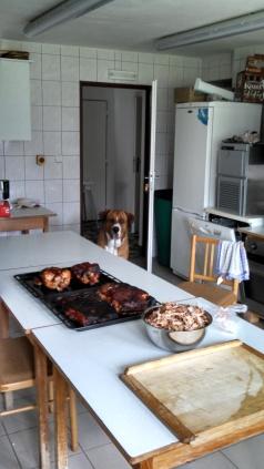 Baldo the Czech Dog